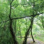humus-park-2016-palu-di-livenza-32