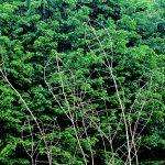 humus-park-2016-palu-di-livenza-34